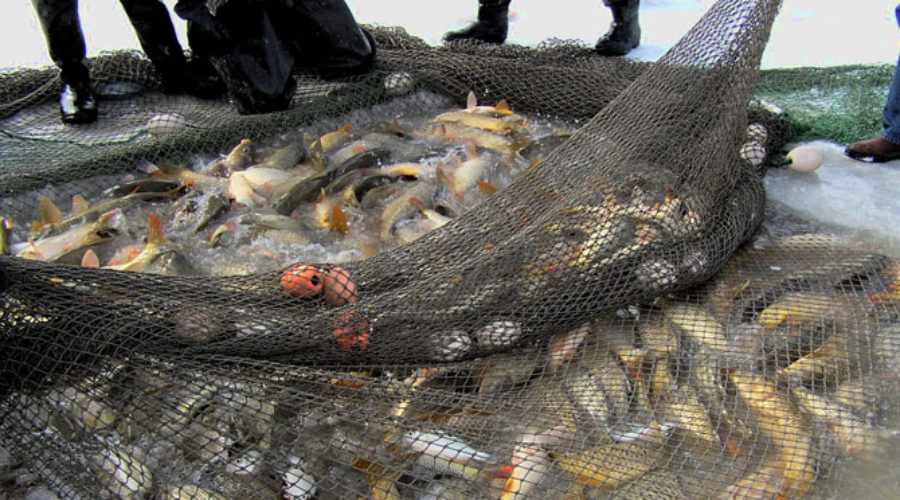 So long, carp! Here's how Utah Lake could have clear water by 2017