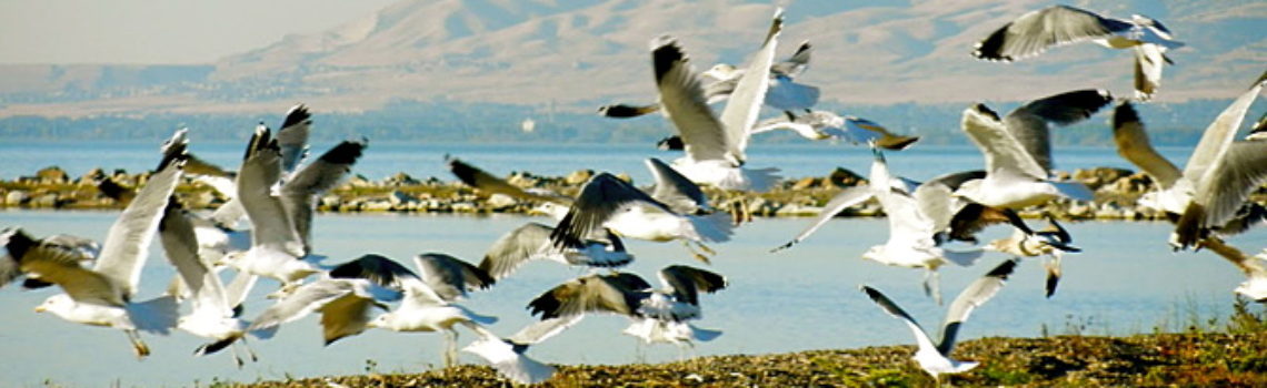 "Utah Lake: ""No. 1 birding spot in Utah County"""