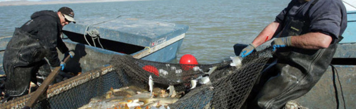 Two years in, carp removal continues at Utah Lake