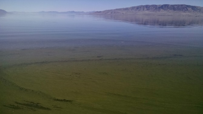Caution:  Dangerous algae bloom at Utah Lake