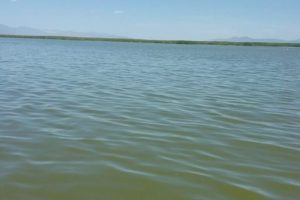 Provo Bay Algae Bloom, Utah Lake Still Open